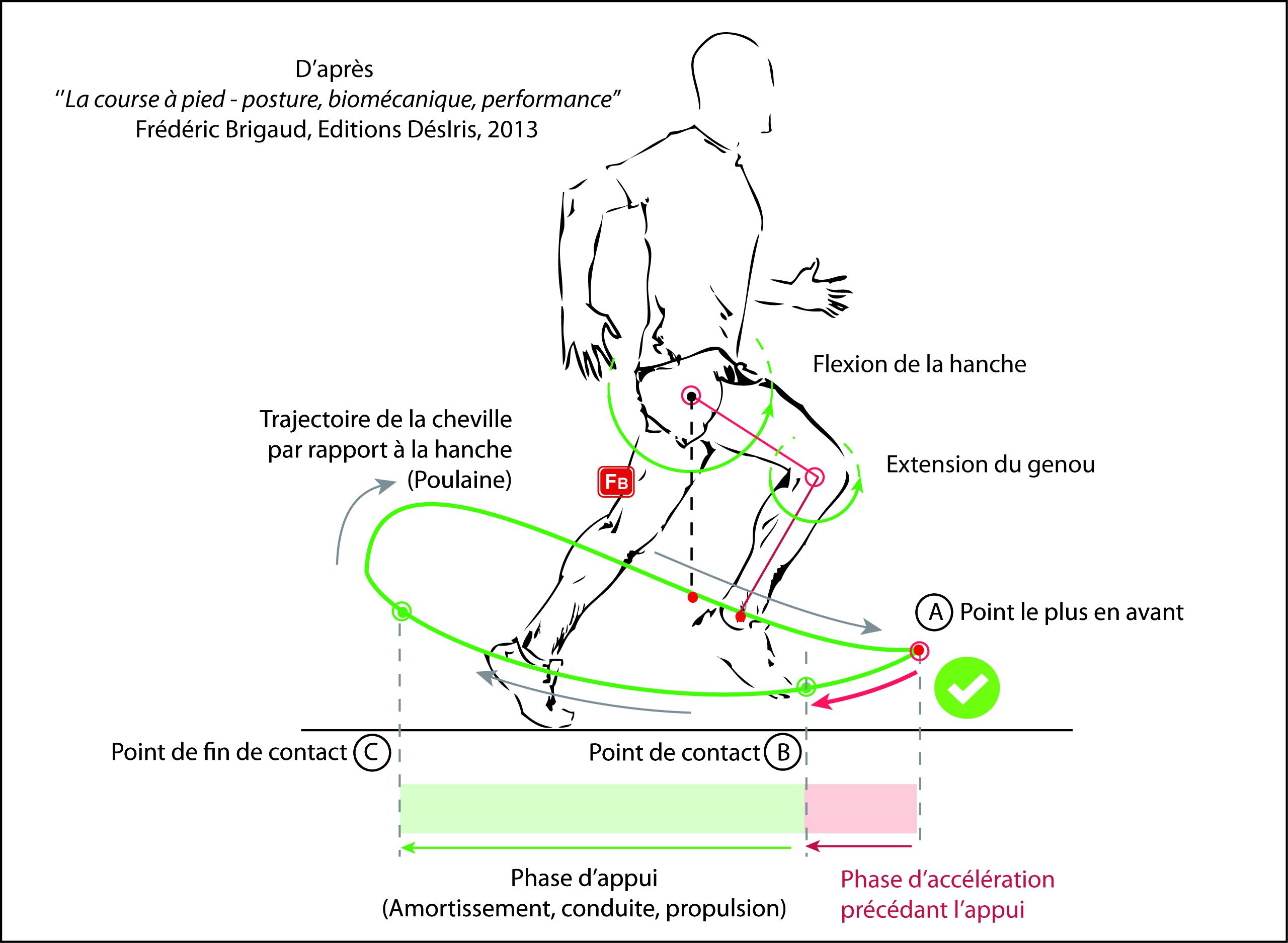 biomecanique course a pied